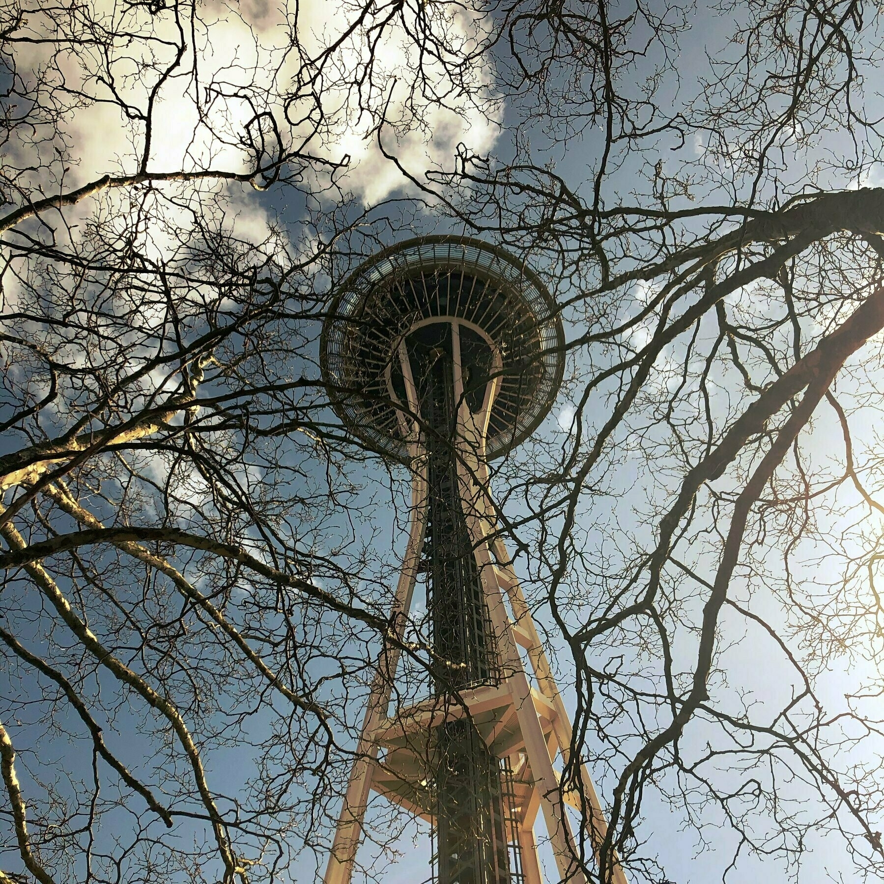 The Space Needle Looms above. Winter branches snake out in front of it.