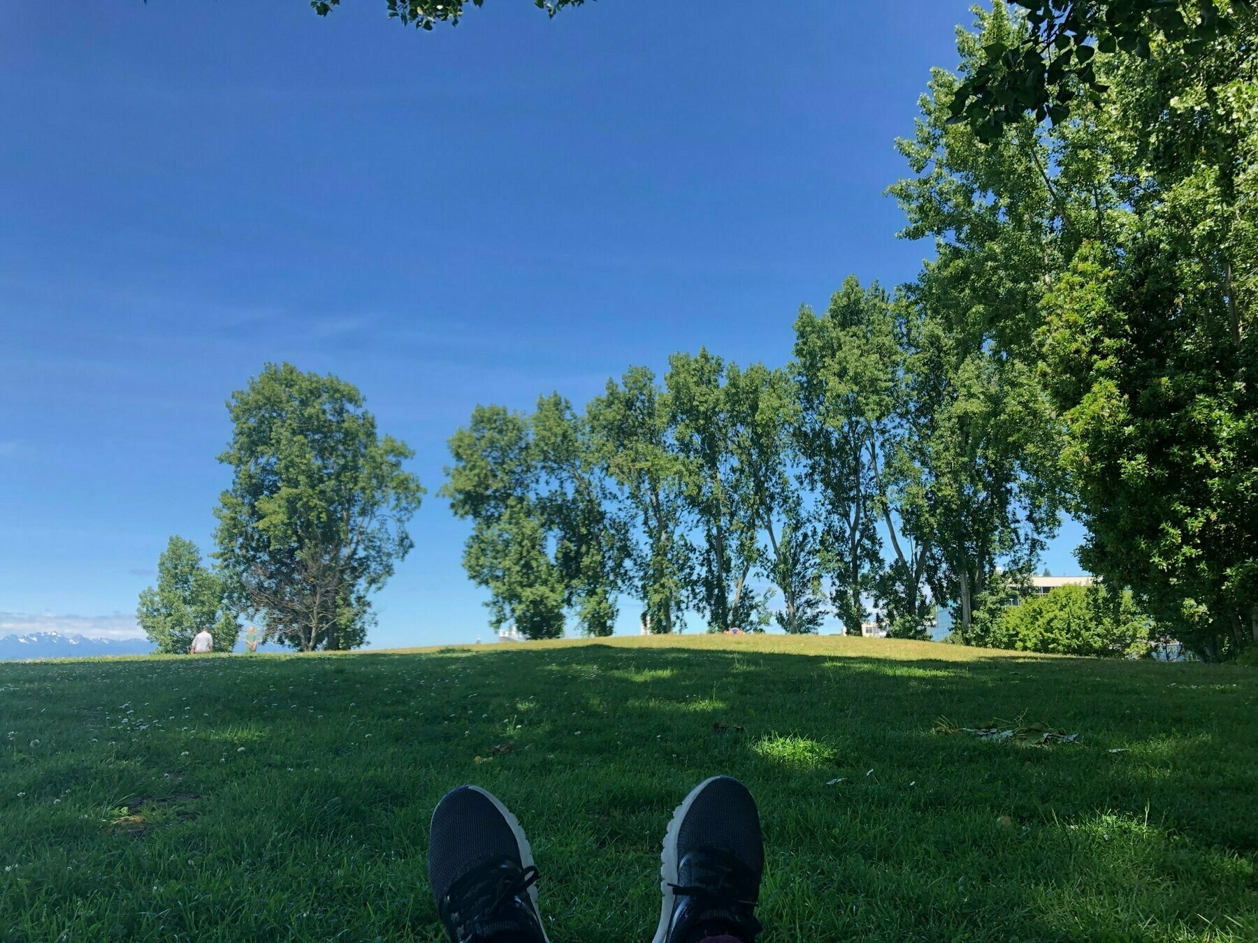Cheri's feet (in sneakers) and a grassy field with cottonwood trees.
