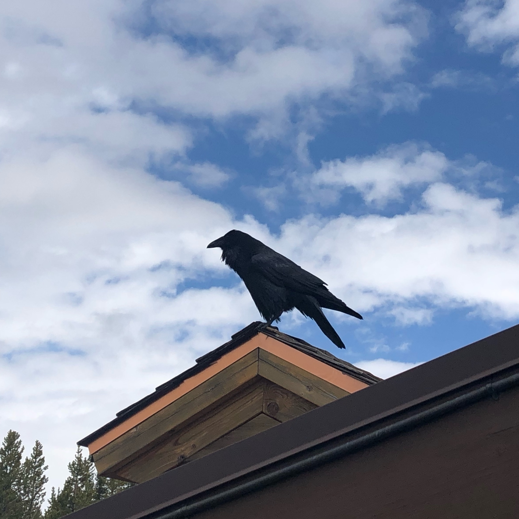 A raven sits on a roof edge