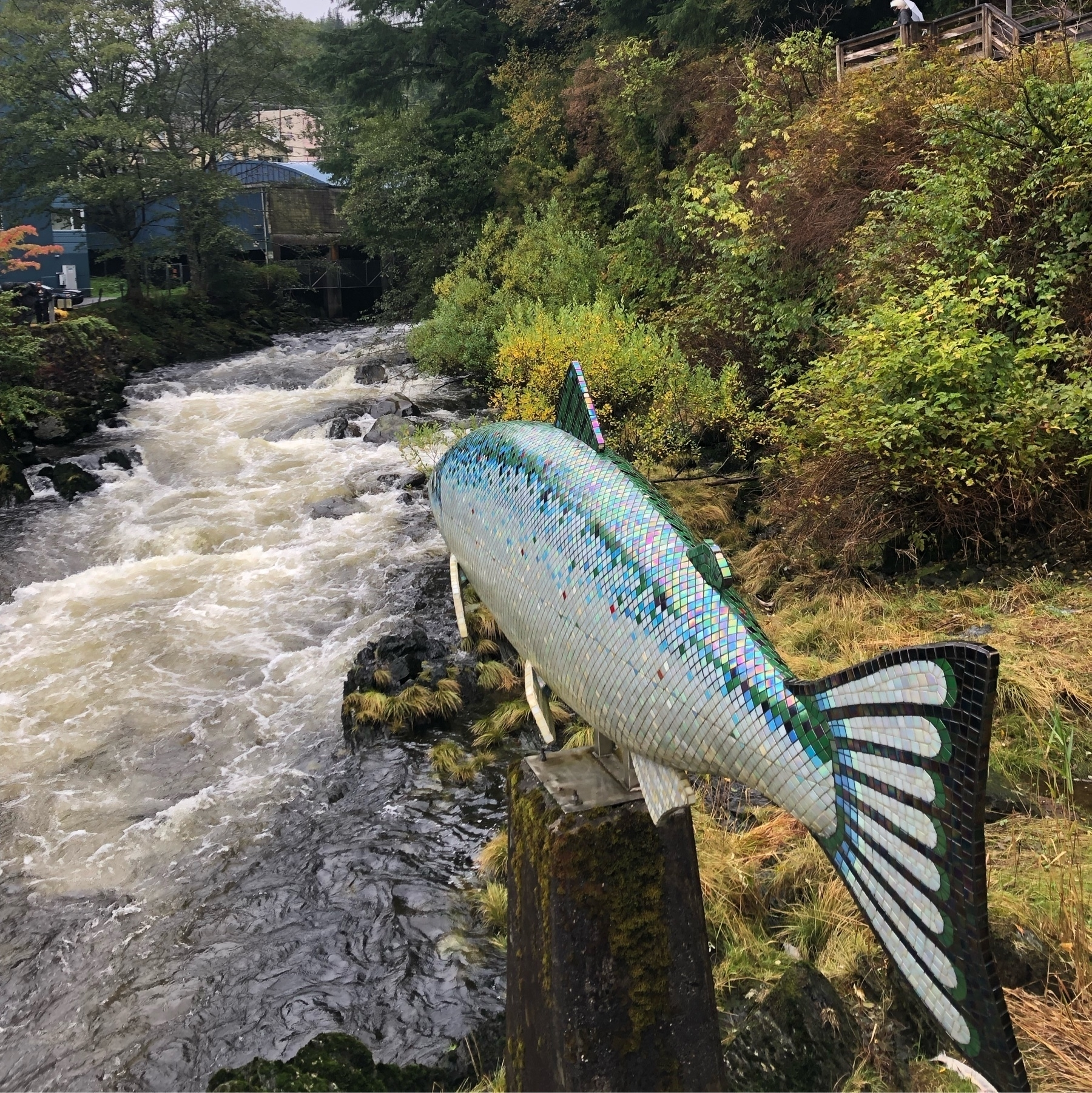 A large salmon made of wood and covered in tiny tiles in a realistic color, it points towards the raging river, an art installation in Ketchikan Alaska
