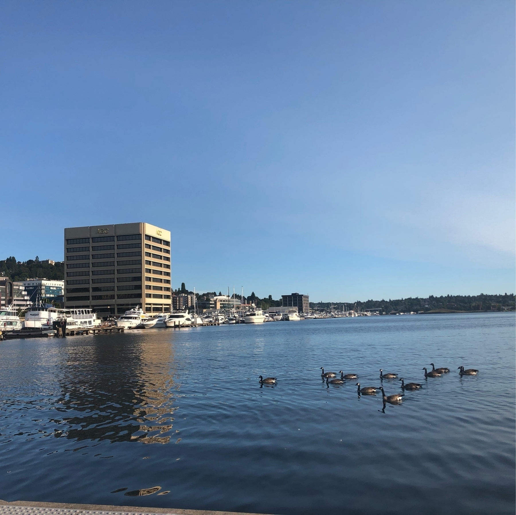 A smooth blue lake hosts a small fllock of Canadian Geese and the mirror reflection of a squat brown bank building. A mellow summer morning with clear skies.