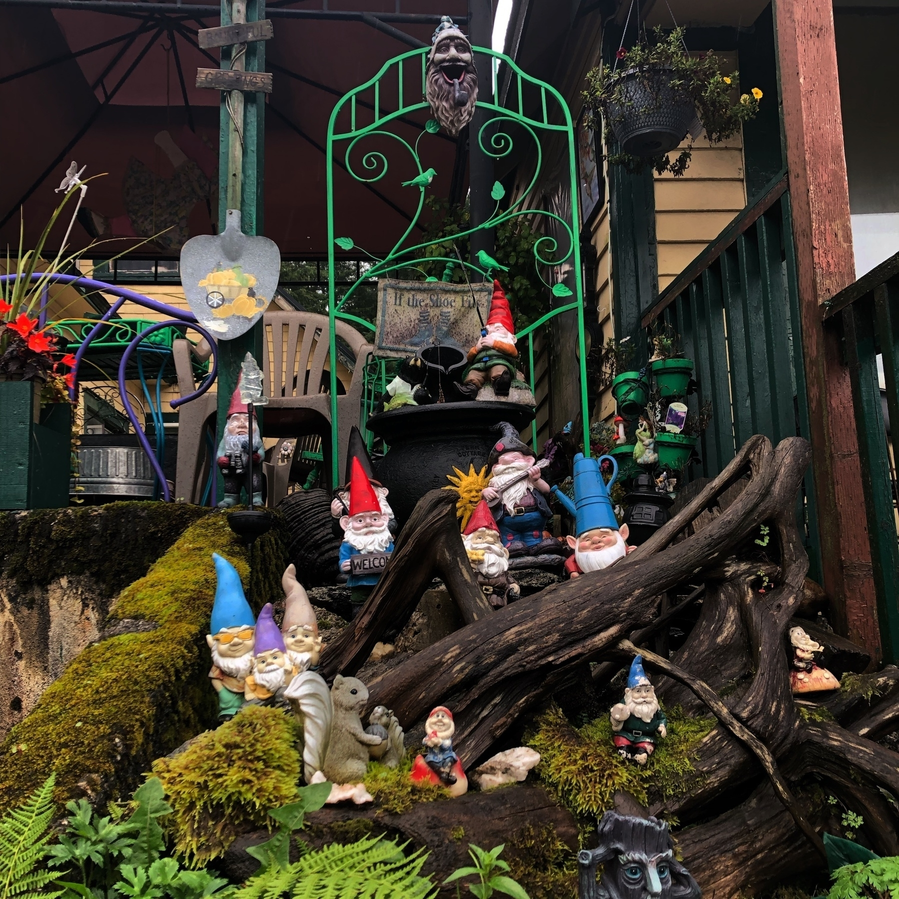 A view of a dozen or so cheerful garden gnomes resting in a residential garden. Some play instruments, others hold binoculars or fishing gear.