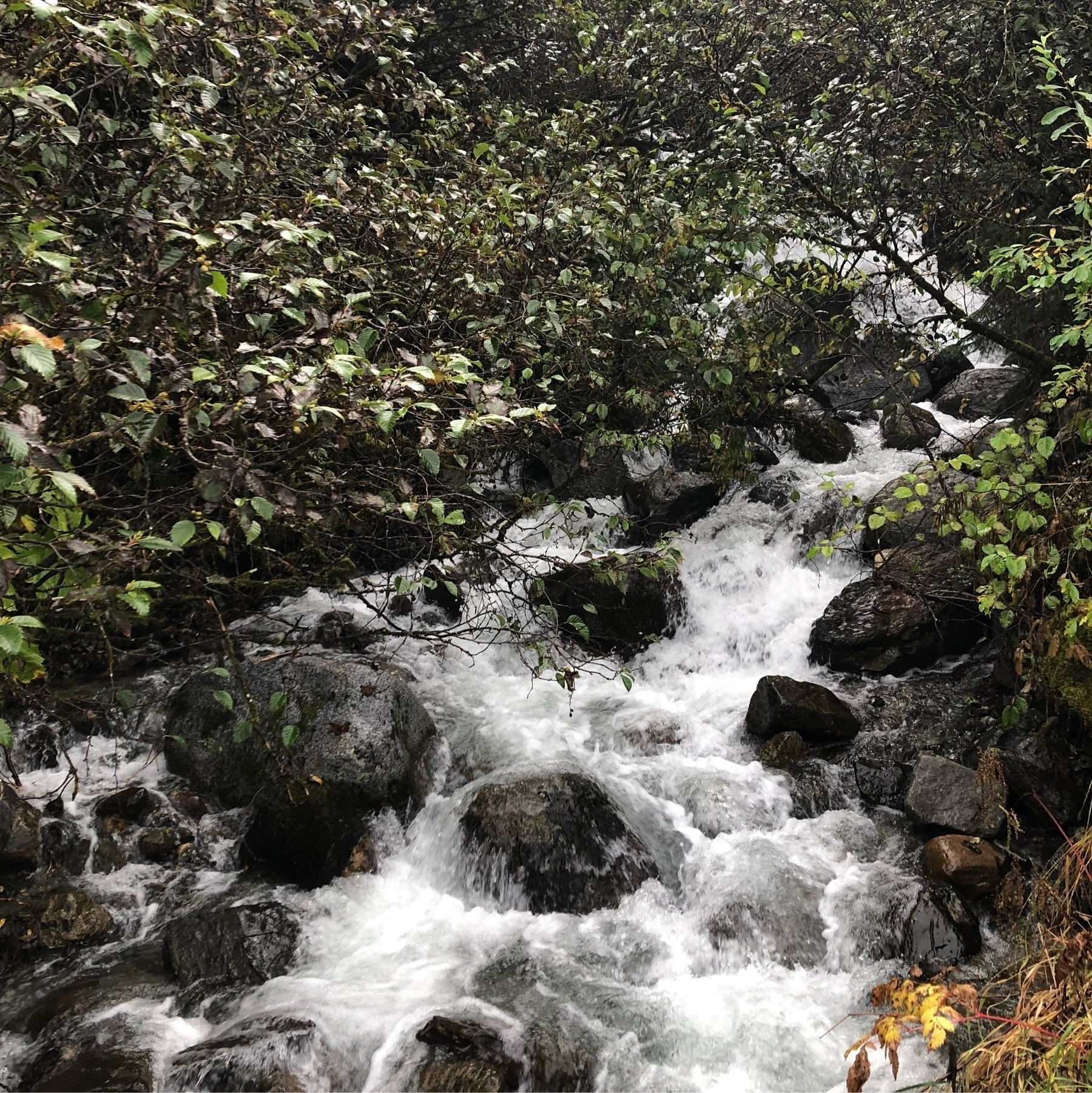 Thin streams of cold water form a lacy network as they flow over boulders in this pretty forest waterfall.
