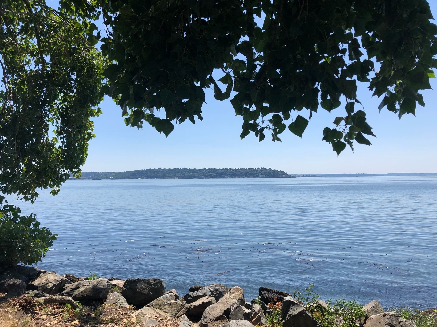 The blue water of Elliott Bay beneath drooping leafy tree branches.