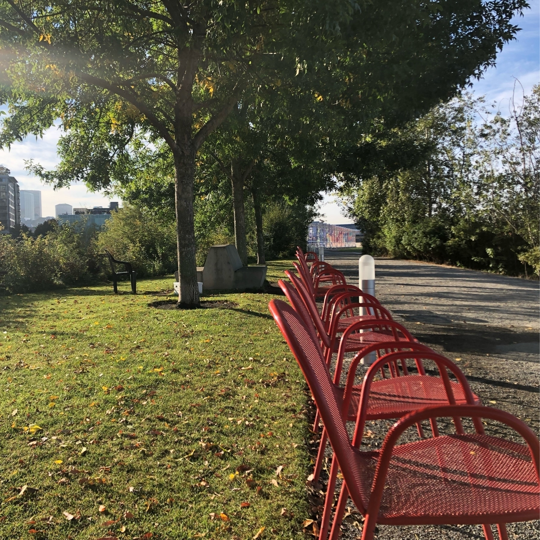 A row of red metal chairs along a path. The damp green grass is littered with early fall leaves. green grass. red chairs. yellow leaves. slanting sunlight. A portrait of early fall.